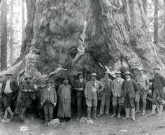 """Theodore Roosevelt, before the """"Grizley Giant,"""" big trees of California - circa. 1903"""