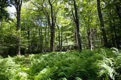 Birding at Canaan Valley National Wildlife Refuge, West Virginia - Bucket List Dream from TripBucket