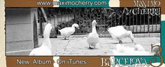 Santa Eulalia Geese - Barcelona 3 Postcard cathedral catedral 13 ocas