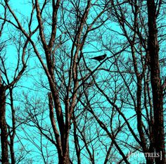 The First Song  5x5 Bird nature tree by FourTreesPhotography, $9.00