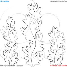 seaweed coloring pages httpwhiteprintcoukykoi twilight saga