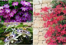 Τα 9 πιο όμορφα αναρριχώμενα φυτά! Climbing Flowers, Decoration Design, Echeveria, Flower Decorations, Decoupage, Home And Garden, Outdoor Structures, Plants, Gardening