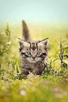 kitty.春天.草地