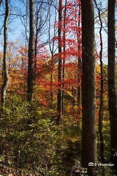 Fall Foliage Photography, Nature photography, autumn Victoria Restrepo photography,