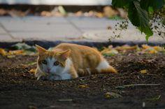 A Cat in a bush.
