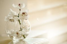 Orchid Wallpaper, Wedding Cards, Wedding Day, Wedding Reception, Wedding Things, Growing Orchids, Clear Glass Vases, Wild Orchid, Orchid Care