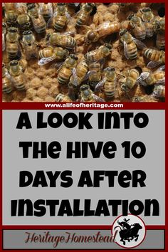 Bees   Bee Care   How to Bees   Bee Hive   What your hive may look like ten days after installing a bee package. The honey bee life cycle has most likely begun with eggs, larva and capped brood!