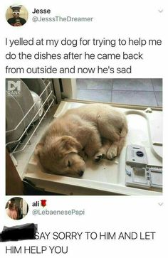 20 Adorable and Hilarious Animal Moments On Weekend - haarschnitte - 20 Adorabl. - 20 Adorable and Hilarious Animal Moments On Weekend – haarschnitte – 20 Adorable and Hilarious - Animal Jokes, Funny Animal Memes, Dog Memes, Funny Dogs, Funny Memes, Lmfao Funny, Hilarious Sayings, Dog Humor, Funniest Memes