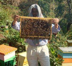 Fairtrade Beekeepers Harvest ing Honey