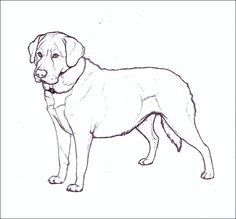 Labrador by nikkiburr on DeviantArt Horse Coloring Pages, Dog Coloring Page, Outline Drawings, Cute Drawings, Watercolor Animals, Watercolor Art, Comic Style Art, Animal Sketches, Dog Art