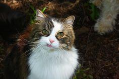 Cat Letter: Dear Rogue