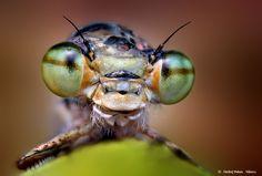 Green eyes by Ondrej Pakan, via 500px