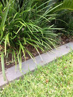 Bluestone garden edge strip 100mm wide