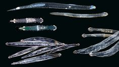 Inside the Gorgeous and Mysterious World of Plankton   WIRED