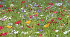 Es wird bunt: So legen Sie eine Blumenwiese an - All For Garden Hydrangea Care, Hydrangea Flower, Hippie Garden, Meadow Garden, Hippie Flowers, Meadow Flowers, Garden Types, Garden Painting, Garden Inspiration