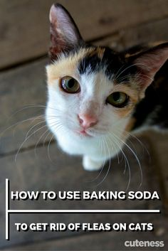 Kill fleas on your cat the natural way by using baking soda.