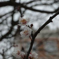 ...propositi di primavera...