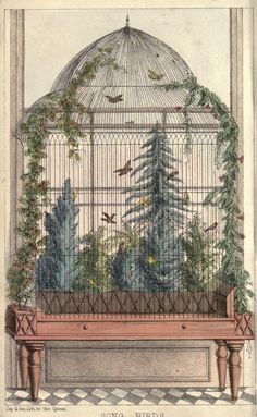 Song birds, and how to keep them. - Biodiversity Heritage Library