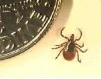 What is Lyme Disease? Lyme Disease is caused by a spirochete, Borrelia burgdorferi. A spirochete is a type of bacterium. It is transmit. Wood Tick, Brown Dog Tick, Deer Ticks, Tick Bite, Lyme Disease, Flea And Tick, Seasons, April 13