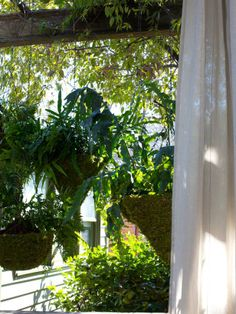 Lush Ferns - 6 Ways to Make Your Outdoor Space Private on HGTV