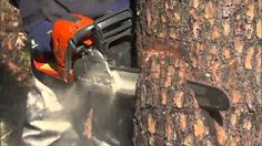 Chainsaw How To - Notch and Hinge Techniques - YouTube
