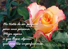 No trates de ser perfecta para una persona, mejor espera a que llegue alguien y ame tus imperfecciones
