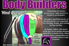 We all want our Equine Athletes to perform their best for us, and we all want them to do so willingly, happily, and comfortably! We are often asked for tips on how and where to massage your horses,...