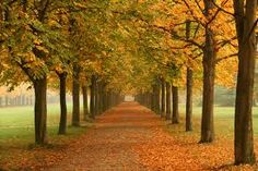 autumn germany - Google Search