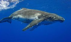 whale - Google Search