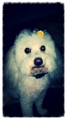 Sunshine boy Polar Bear, Bullet, Sunshine, Boys, Animals, Baby Boys, Animales, Animaux, Nikko