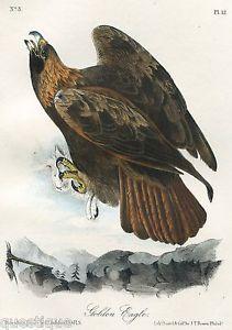 GOLDEN EAGLE, AUDUBON ROYAL OCTAVO EDITION, SUPERB