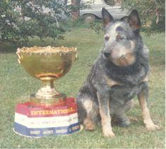 Dingo Lady: Little Aussie Battler