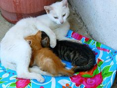 Cat and kittens - http://www.1pic4u.com/blog/2014/09/21/cat-and-kittens/
