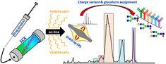 #AChem: Charge Variant Analysis of Monoclonal Antibodies Using Direct Coupled pH Gradient Cation Exchange Chromatography to… #MassSpec