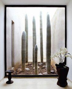 Patio interior con cactus