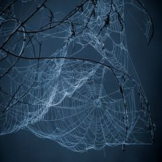 Moonlight on spider webs          My take-Sometimes the most breathtaking scenery can be found in your own backyard.  No need to take a vacation to enjoy great scenery!