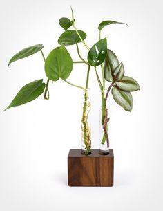 D DOLITY 6 Test Tube Glass Flower Vase Air Plants Planter Vase Terrarium Container for Office Home Garden Restaurant Wedding Decor