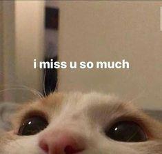 Cute Cat Memes, Cute Love Memes, Stupid Funny Memes, Funny Relatable Memes, Haha Funny, Funny Cute, Memes Amor, Memes Estúpidos, Comedy Memes