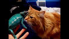 ТОП 7! Встреча котиков с другими странными животными.ПОДБОРКА