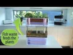 Aquaponicals aquaponics system  http://www.theaquaponicstore.com/Aquaponicals-p/tpdas001.htm