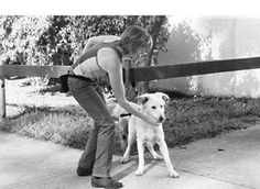 Teaching an Aggressive Dog How to Be Social Around Other Dogs - Whole Dog Journal Article
