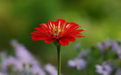 Nel Verde Infinito - Zinnia | In The Endless Green : Pentax … | Flickr
