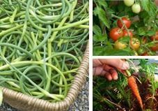 growing plants, edibl plant, indoor edible garden, indoor plants in pots, food