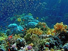 Egypt, Red Sea, Sharm el-Sheikh, Coral reefs!