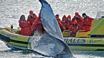 Admire native marine wildlife in the waters of British Columbia on this whale-watching adventure in Victoria from a zodiac speedboat. Carnival Legend, Tongass National Forest, Victoria Bc Canada, Glacier Bay National Park, Photos Of Prince, Cruise Port, Alaska Cruise, Whale Watching, Vancouver Island