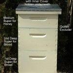 Bee Swarm Removal Service