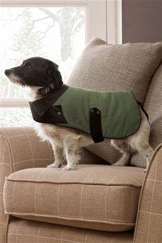 Green Dog Coat