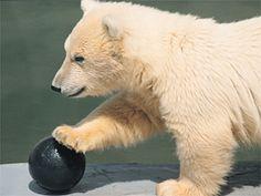 <3 bear