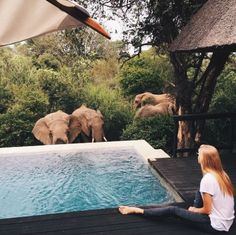 ✩pinterest: @rebeccaestarr✩                             Royal Malewane, South Africa #elephants #animals #africa #savetheelephants