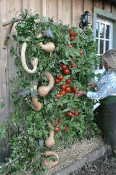 An edible wall consists of a wall panel—usually made of metal—that's punctured with openings that are filled with soil and planted with vegetables. Often, the panel can be hung from an existing wall with relative ease. Read more =>